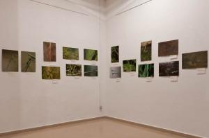 Exposició Libèl·lules