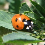Exposició Els Escarabats de Cerdanya