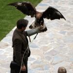 Demostració de vol d'aus rapinyaires